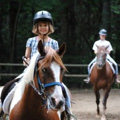 CC Horse3