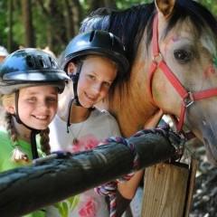 CC Horse2