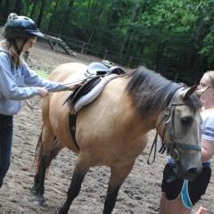 CC Horse 13