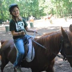 CC Horse 14