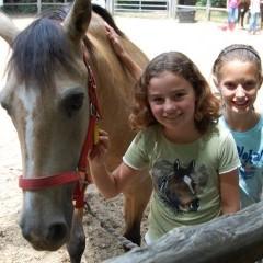 CC Horse1