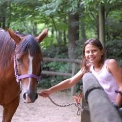 CC Horse4