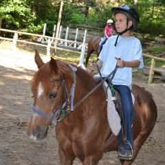 CC Horse 11