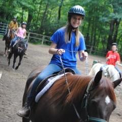 CC Horse 12