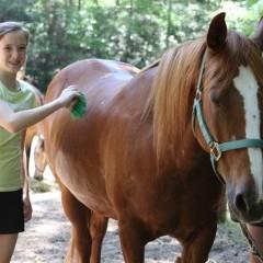 CC Horse5