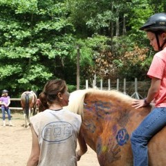 CC Horse9
